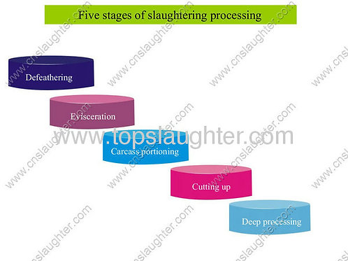 Five stages of slaughtering processing