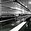 Thumbnail: Chicken processing machine evisceration line Chicken processing machine eviscer