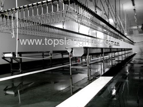 Chicken processing machine evisceration line Chicken processing machine eviscer