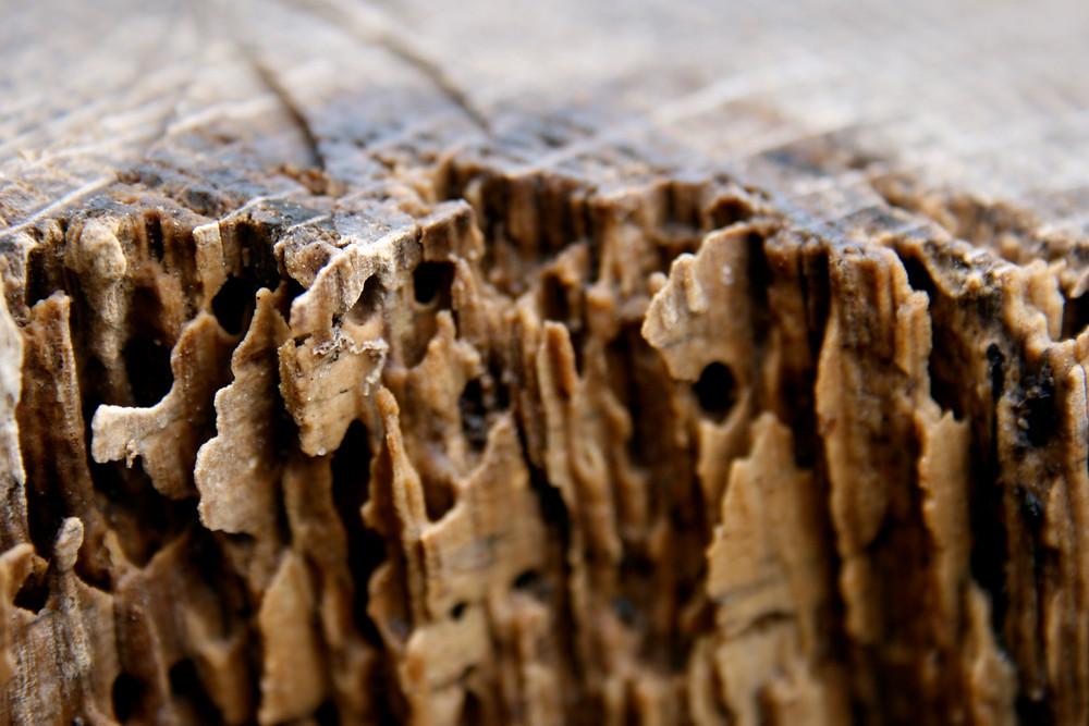 termite-wood-damage.jpg