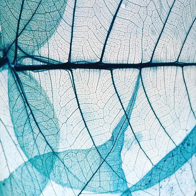 background blue leaf.JPG