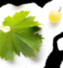 feuille_vigne_raisin_nouet.png