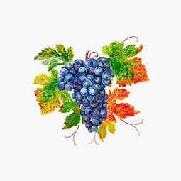 grappe-rouge-illustration.jpg