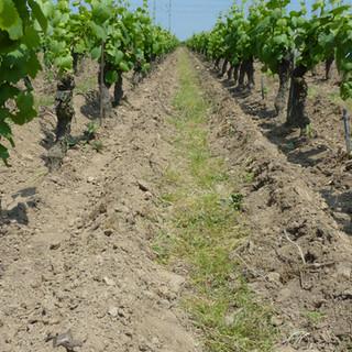 Bedouet vigneron, Muscadet bio, travail du sol