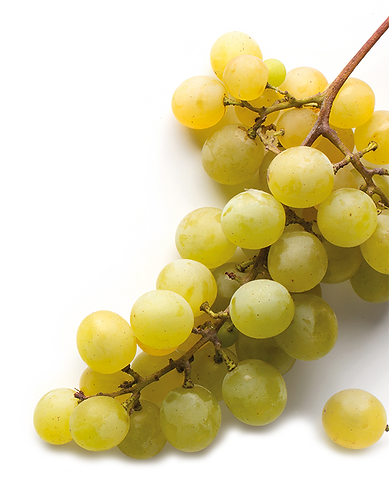 Grappe_muscadet.png