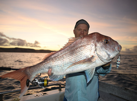 Snapper Fishing Ban