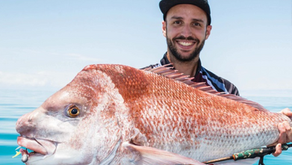 New snapper fishing management arrangements for the South East