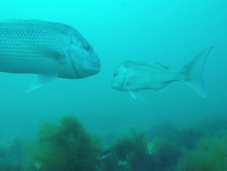 Marine Scalefish Fishery Reform