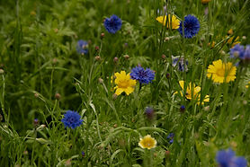 Fleurs 2020-4150.jpg
