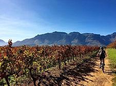เทียวCape Townด้วยตนเองและเมือง Franschhoek, Stellenbosch-Lucky Lion Tours
