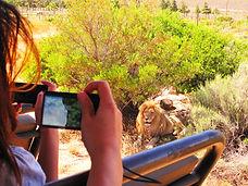 เทียวเคปทาวน์ด้วยตนเองและเมือง Franschhoek, Stellenbosch-Lucky Lion Tours