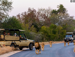 เทียวโจฮันเนสเบิร์กและเคปทาวน์แอฟริกาใต้ด้วยตนเอง-Lucky Lion Tours