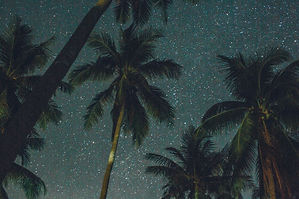 4k-wallpaper-astronomy-coconut-trees-207
