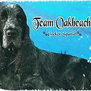 oakbeach.jpg