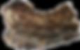 Hjortnacke torkad.png