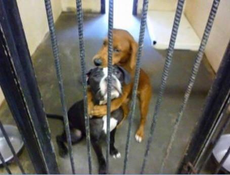 動物愛護支援に向けて活動を始めます