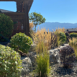 United Landscapes - Rykon / Sonoma Pines