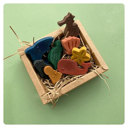 Sea Life Box