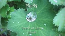 """植物の音楽""""Plants"""""""