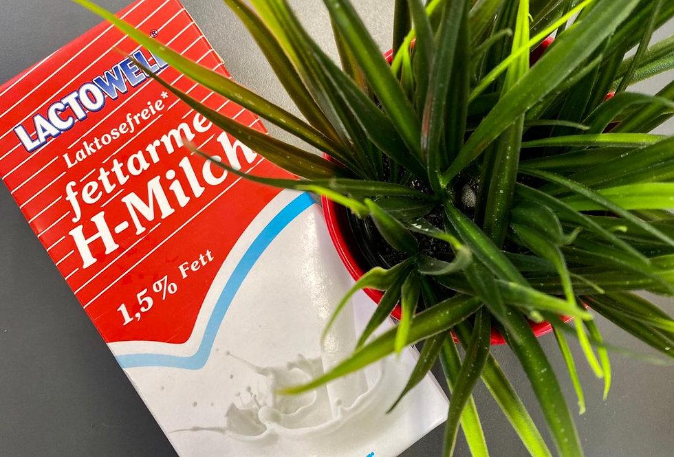 Piens bez laktozes 1l