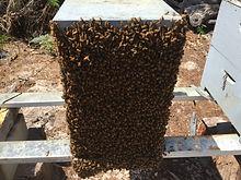 honey, stradbroke,organic,redland honey,natural honey,honey brisbane,bees wax,health products,pure honey,honey online,stradbroke island organic honey,furniture wax,furniture polish,bees wax polish,furniture,,