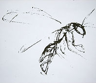 09 insectes cours Anne 2.jpg