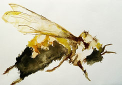 09 insectes cours Anne 4.jpg