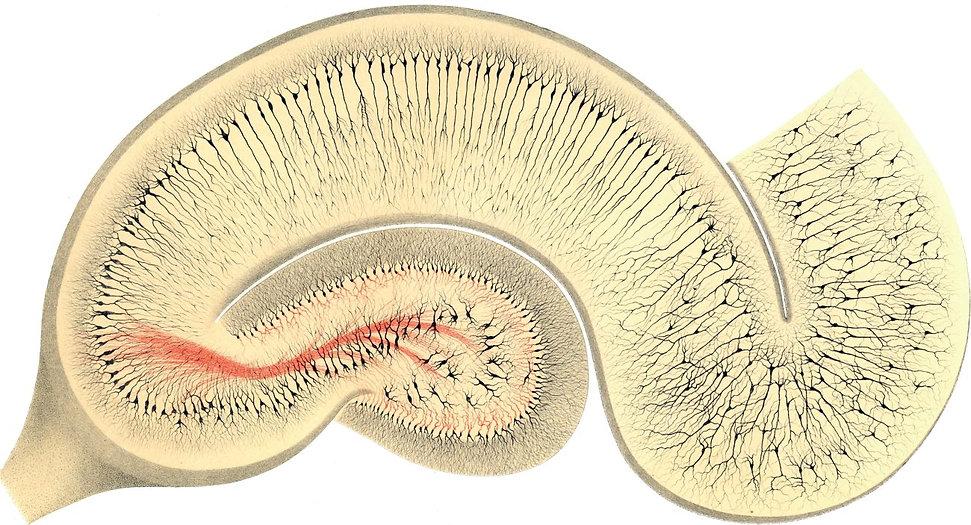 golgi-1894-fig24-hipp1300x703.jpg