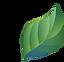 leaf-1821763_1280.png