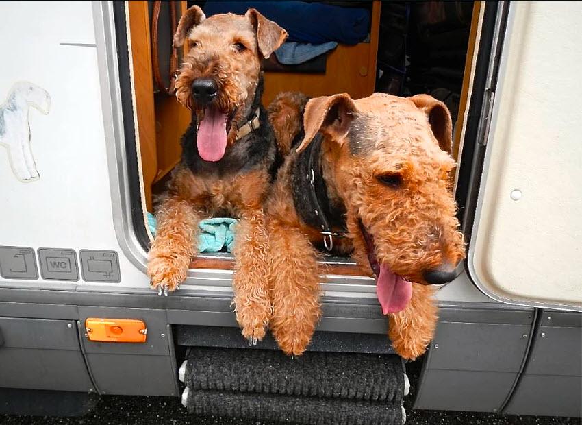 Viaje con sus mascotas