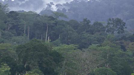 L'Amazonie n'est pas la seule forêt menacée.