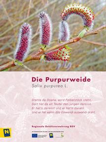 07_Purpurweide_2.jpg