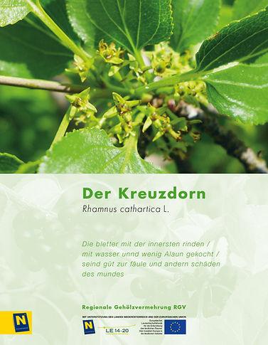 10_Kreuzdorn.jpg