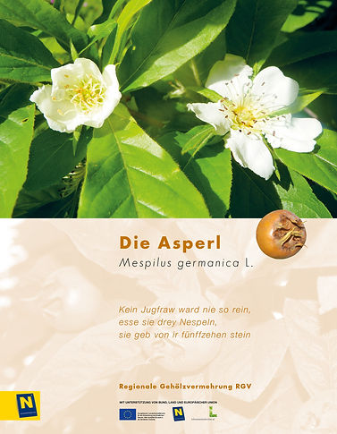 08_Asperl.jpg