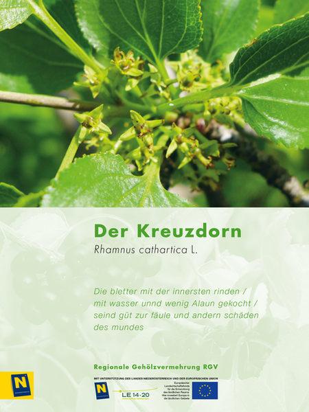 10_Kreuzdorn_2.jpg