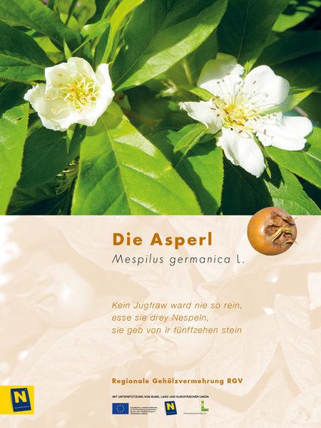 08_Asperl_2.jpg