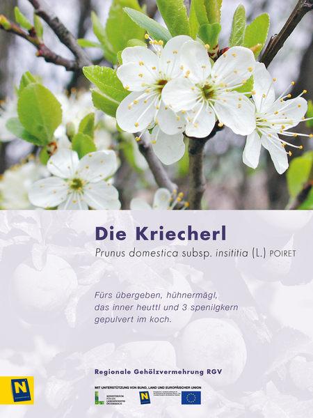 09_Kriecherl_2.jpg