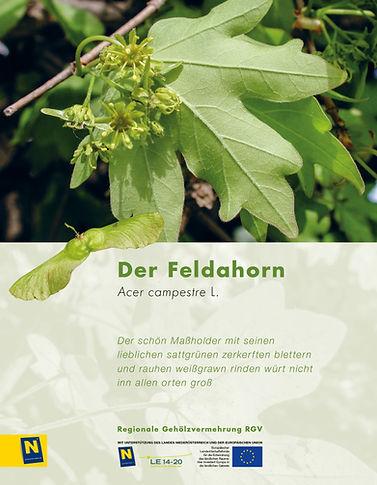 12_Feldahorn.jpg