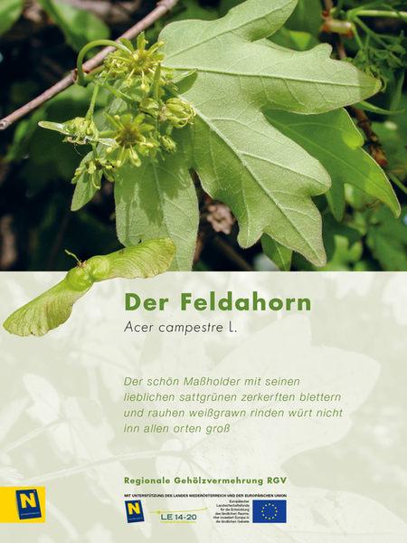 12_Feldahorn_2.jpg