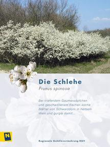 02_Schlehe_2.jpg