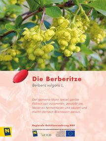 11_Berberitze_2.jpg