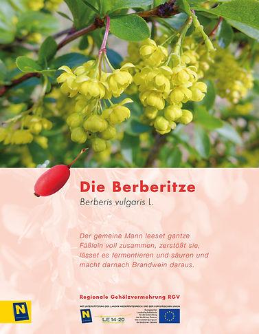 11_Berberitze.jpg