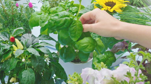 Lilo - Prêt à pousser