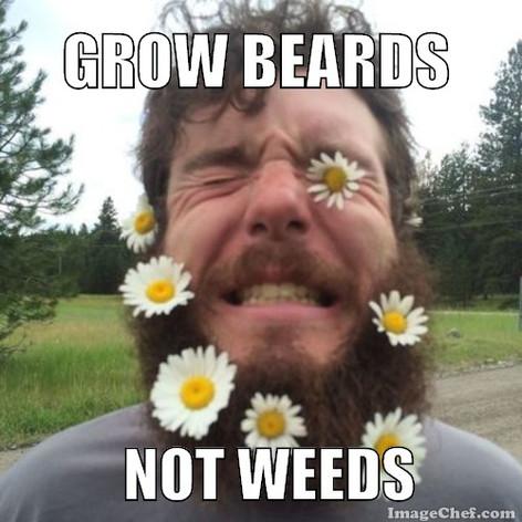 Grow Beards, Not Weeds