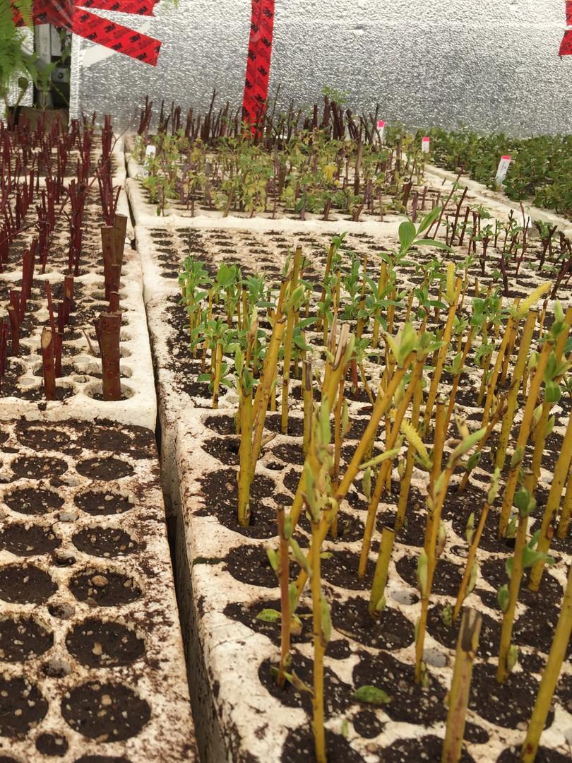 seedlings at Tipi Native plants