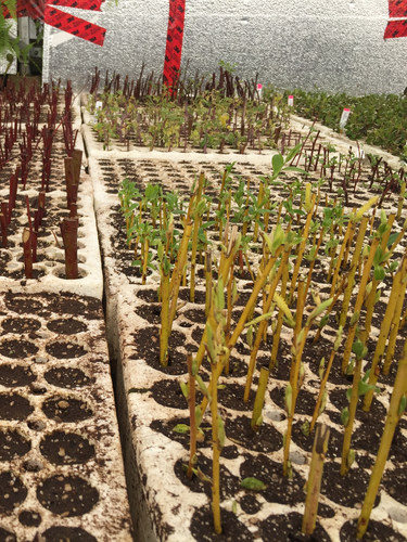 seedlings at Tipi Native plants
