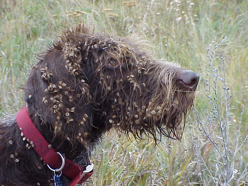 Seeds Attached to Fur