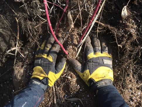 restoration, planting native species