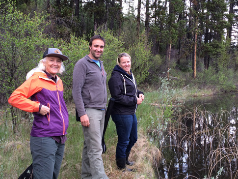 Reasearch for invasive bullfrog
