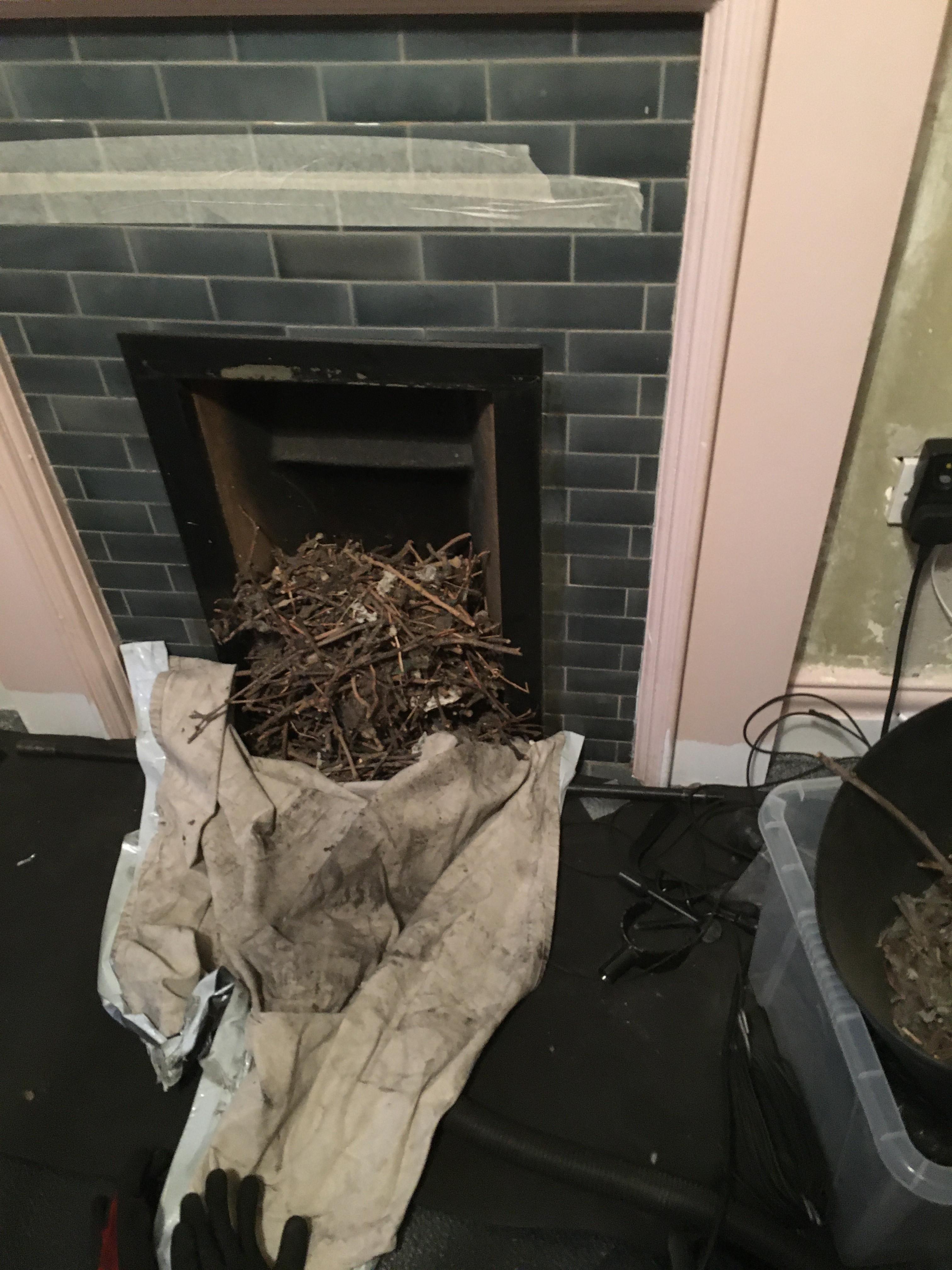 Bird Nest Removal + Sweep
